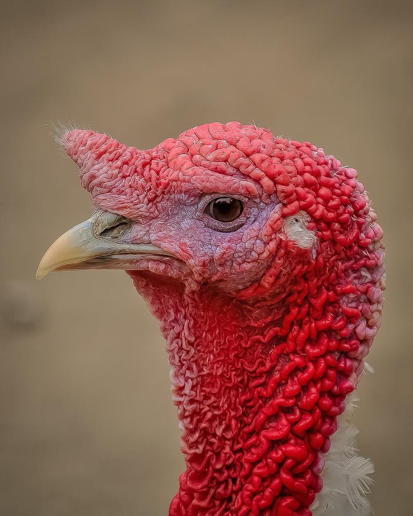 Getting in Gear for Spring Turkey Season
