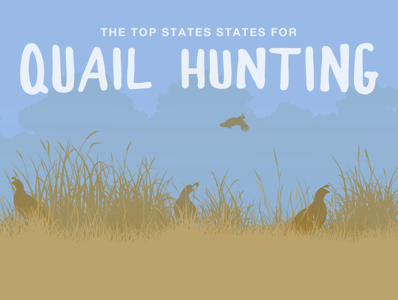 The Top States for Hunting Quail