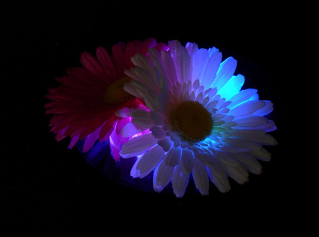 Super Bright Light Base RGBW 40 LED Black Casing