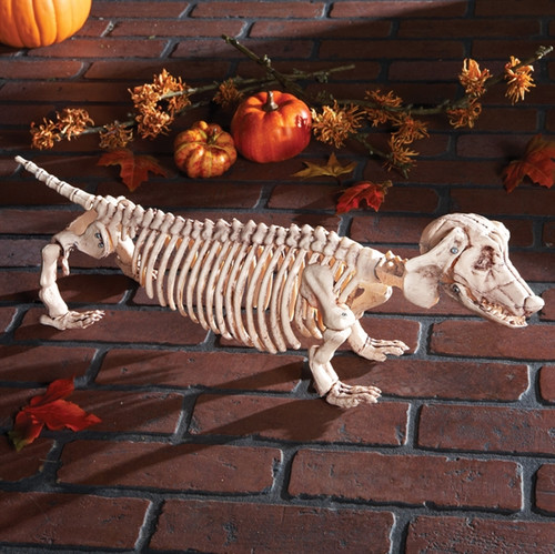 Dachshund Skeleton