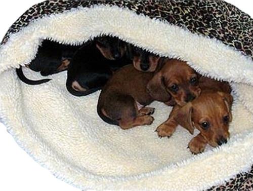 DreamSack Dog Bed