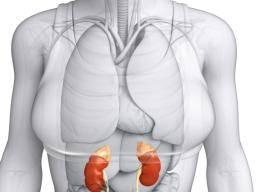New Full Body Detox Liver Kidney Speen Colon Detox