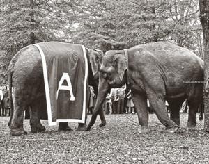 Alabama Crimson Roll Tide Elephant Mascot College Football Photo 50 8x10-48x36