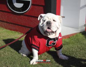 Georgia Bulldogs UGA Mascot Photo Print 02 8x10-48x36