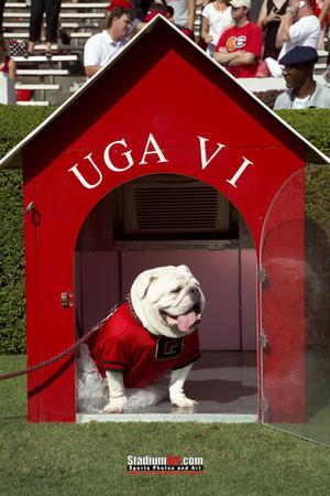 Georgia Bulldogs UGA Mascot Photo Print 11 8x10-48x36