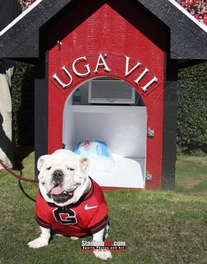 Georgia Bulldogs UGA Mascot Photo Print 12 8x10-48x36