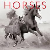 Horses Calendar, Wall Calendar