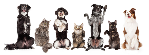8 Reasons why pets are good for our health.