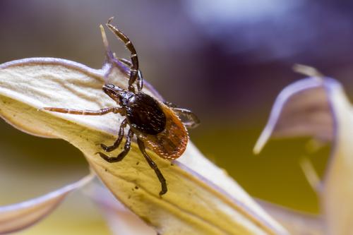 Keeping Bugs Away