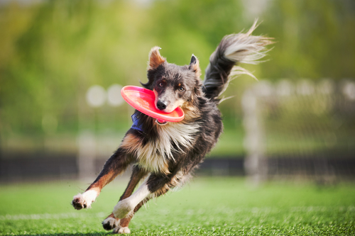 Choosing a dog breed for outdoor activities