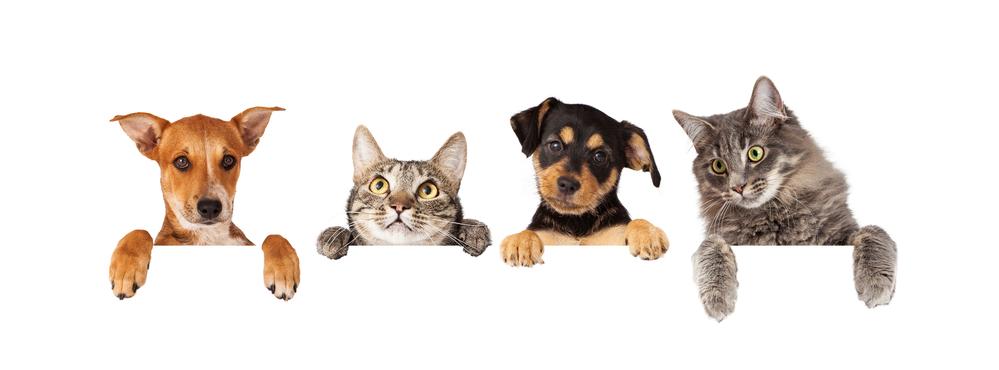 cats-dogs.jpg