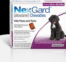 Nexgard for Dogs 24.1-60 lbs - 6 Pack