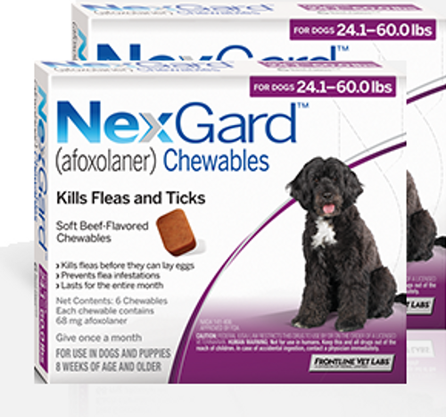Nexgard for Dogs 24.1-60 lbs - 12 Pack