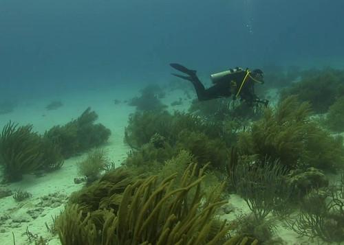 Advanced Buoyancy Course