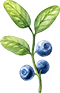 afina-blueberries-for-document.png