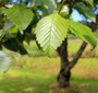 Certified Organic Slippery Elm