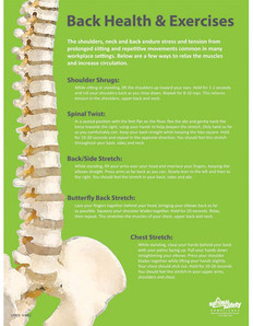 Back Health & Exercises Safety Poster (24 by 32 inch)