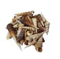 Turitella Seashells - Kilo