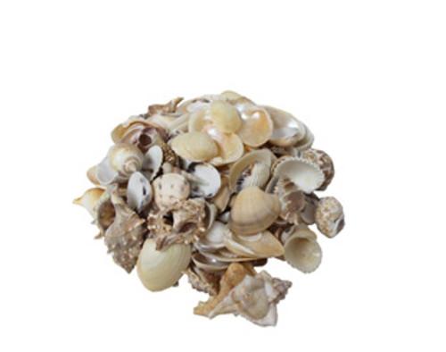 Medium India Mix Seashells