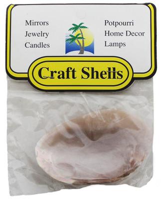 Fresh Water Clam Seashells W/Header