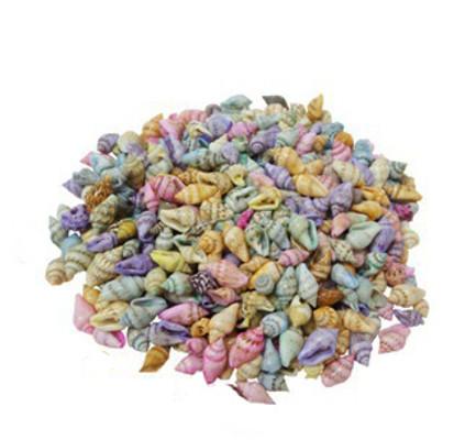 Dyed Natural Nassa Seashells
