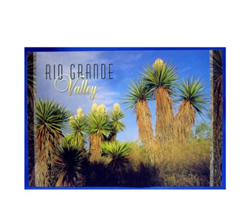 Yucca - Rio Grande Valley Postcard
