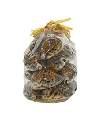 Tiger Cowries Seashells