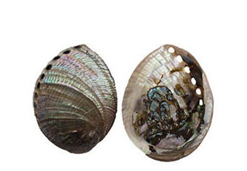 Blue Abalone Seashell- ½ Pearlized & ½ Polished