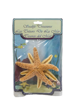 Sugar Starfish With Header