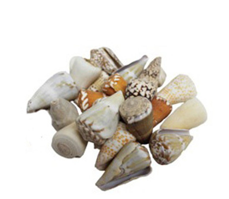 Assorted Cones Seashells