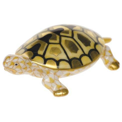 Baby Turtle Butterscotch