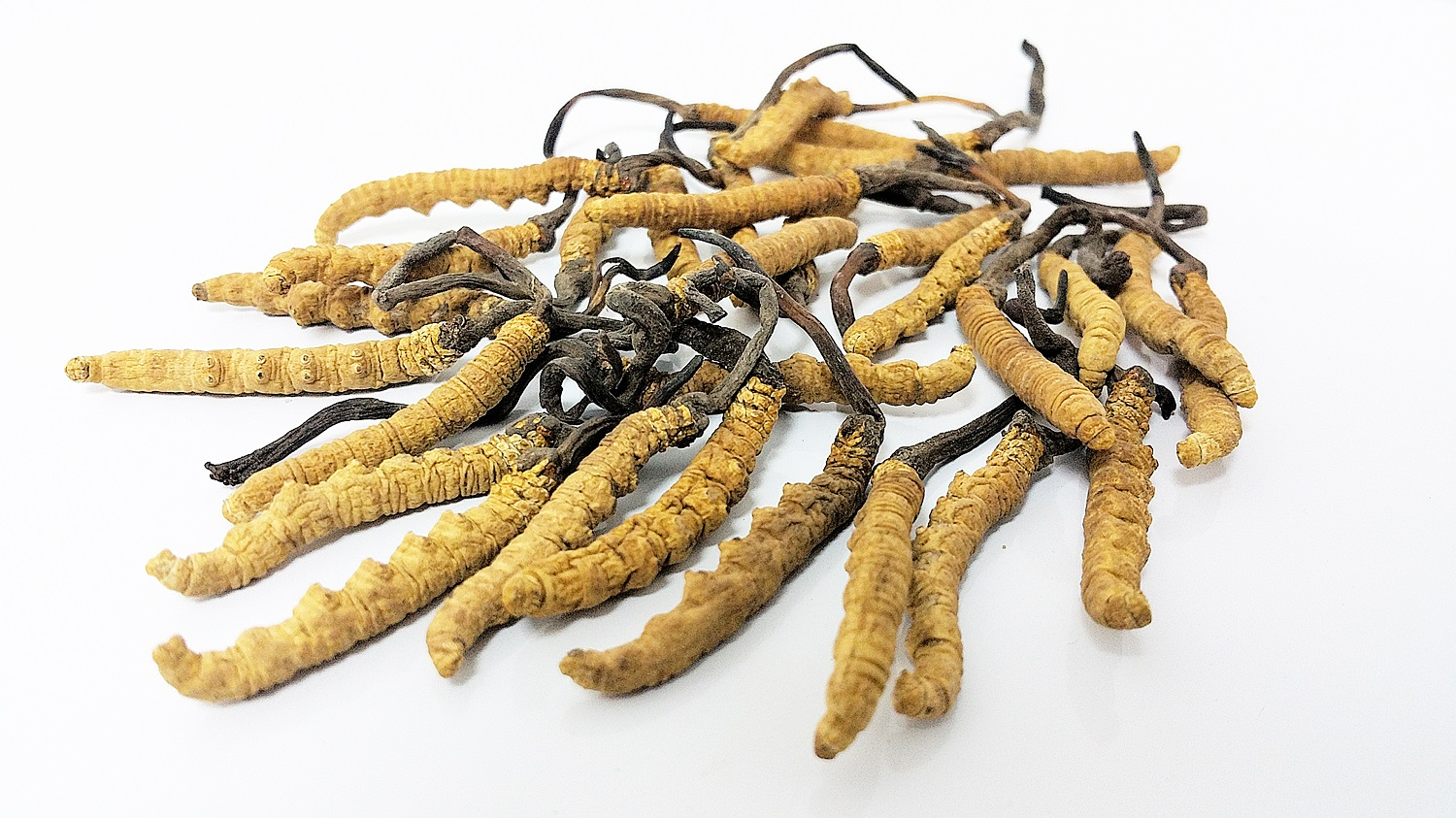 eternal-well-elevated-cordyceps-formula-powdered-extract.jpg