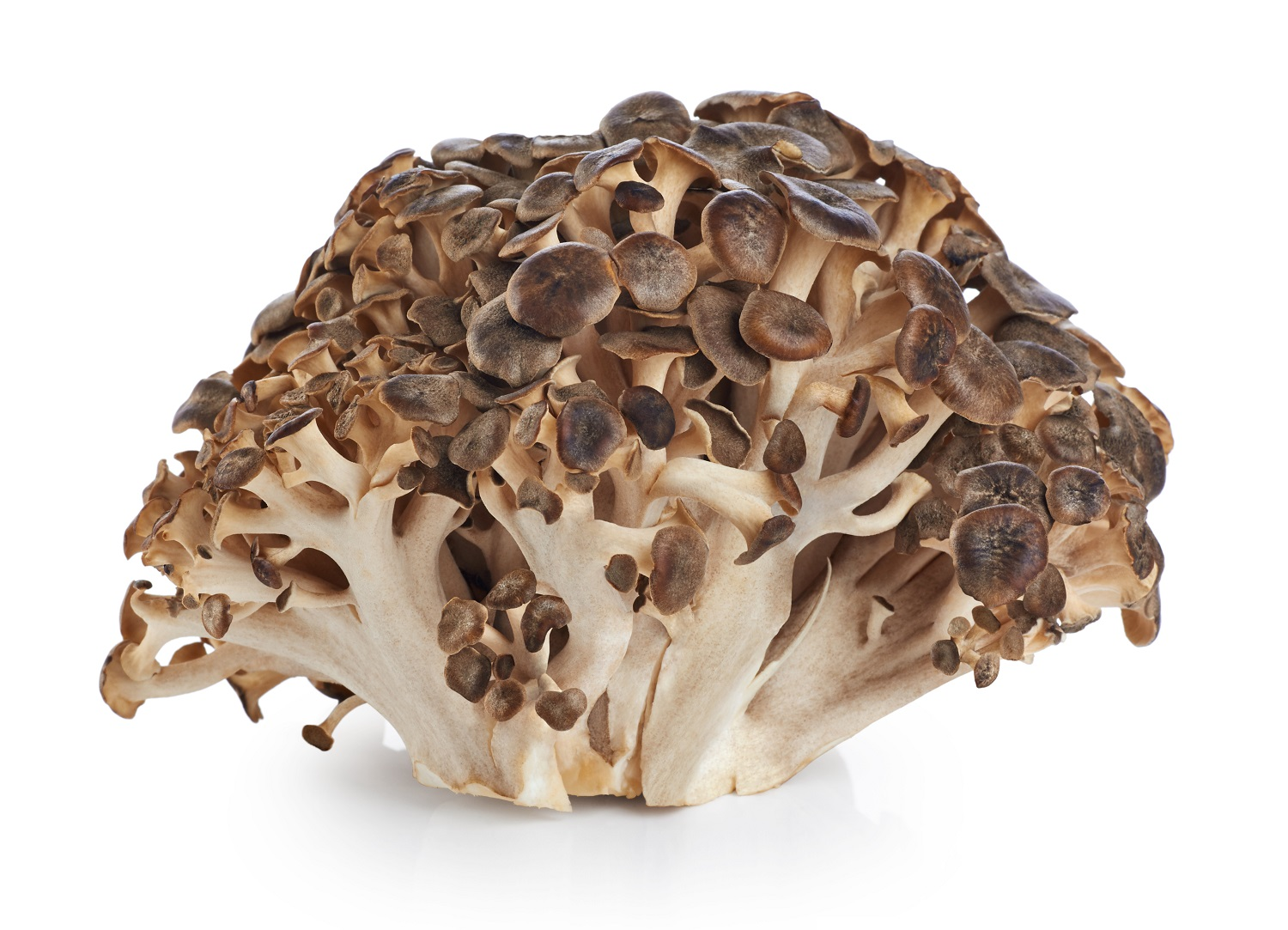 hen-of-the-woods-grifola-frondosa-.jpg