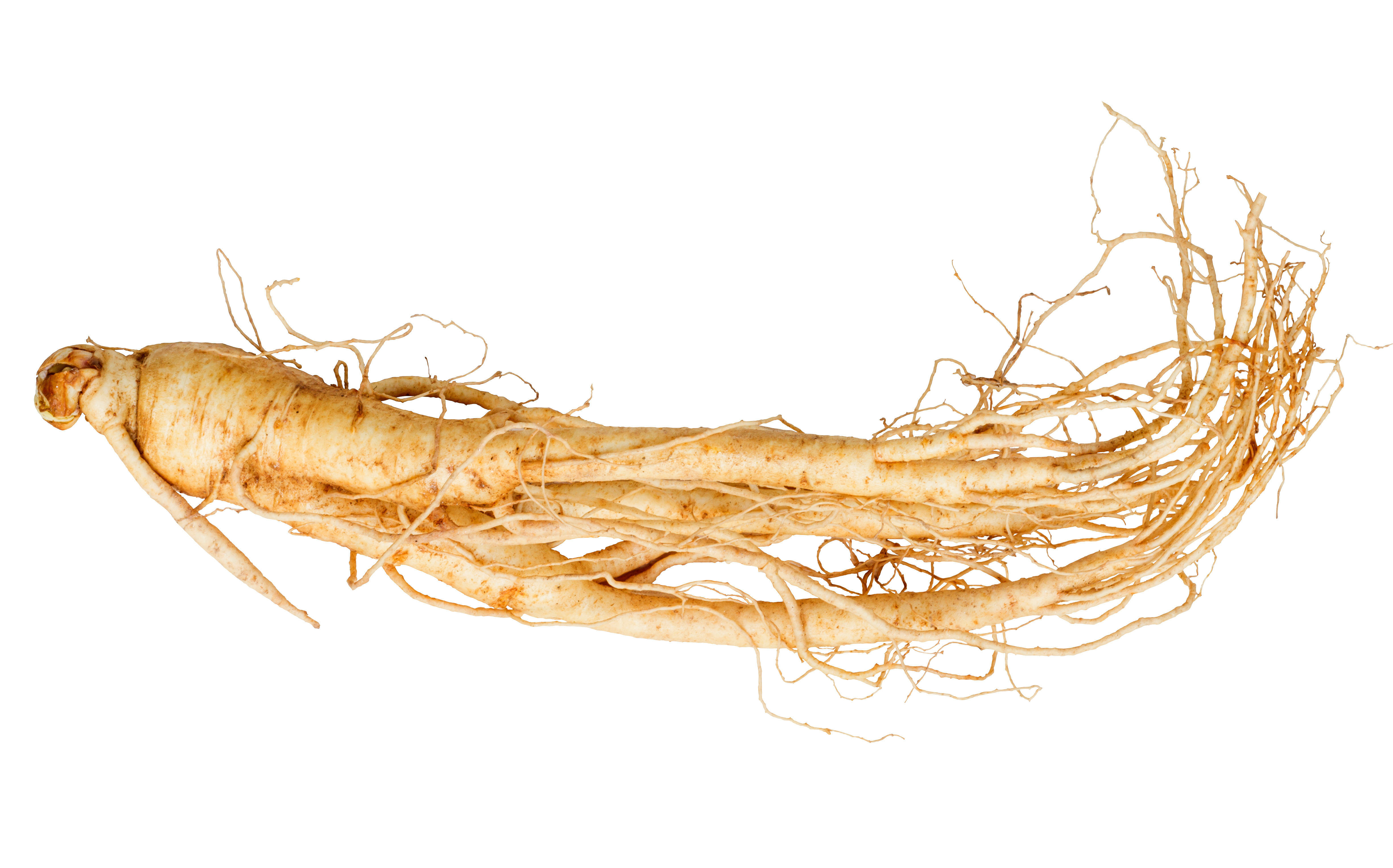 Chinese Ginseng Root Herbal Medicine