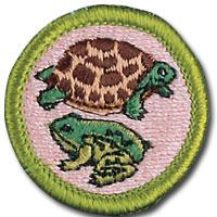 reptile-and-amphibian-study.jpg