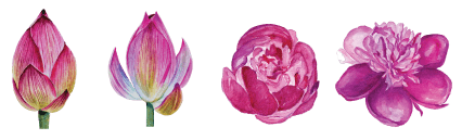 flower-set-compressed.png