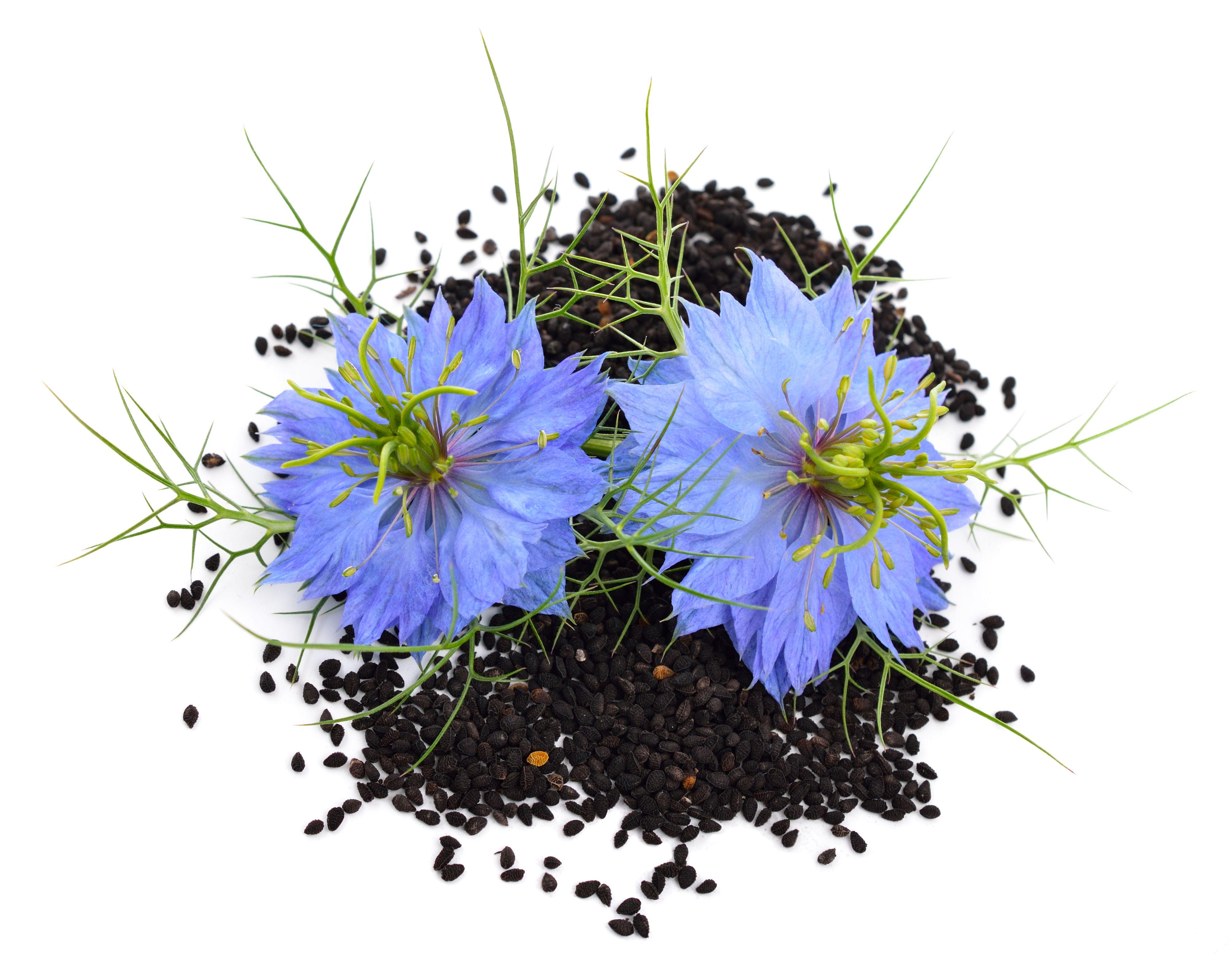 black-seed1.jpg