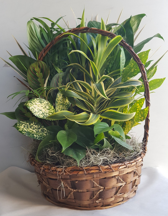 "12"" BASKET DISHGARDEN"