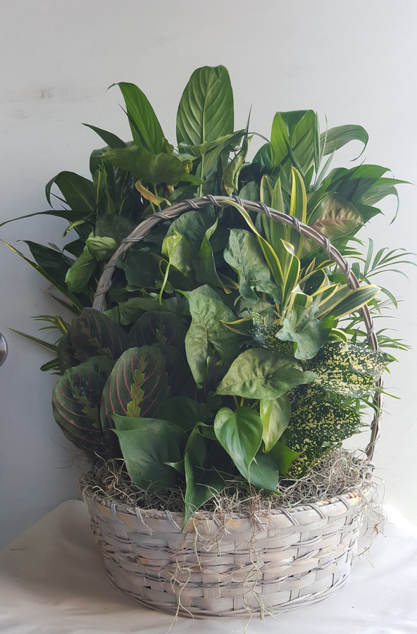 "14"" BASKET DISHGARDEN"