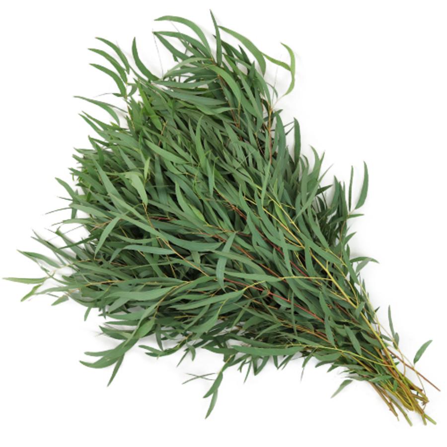 Eucalyptus Willow fl uniion