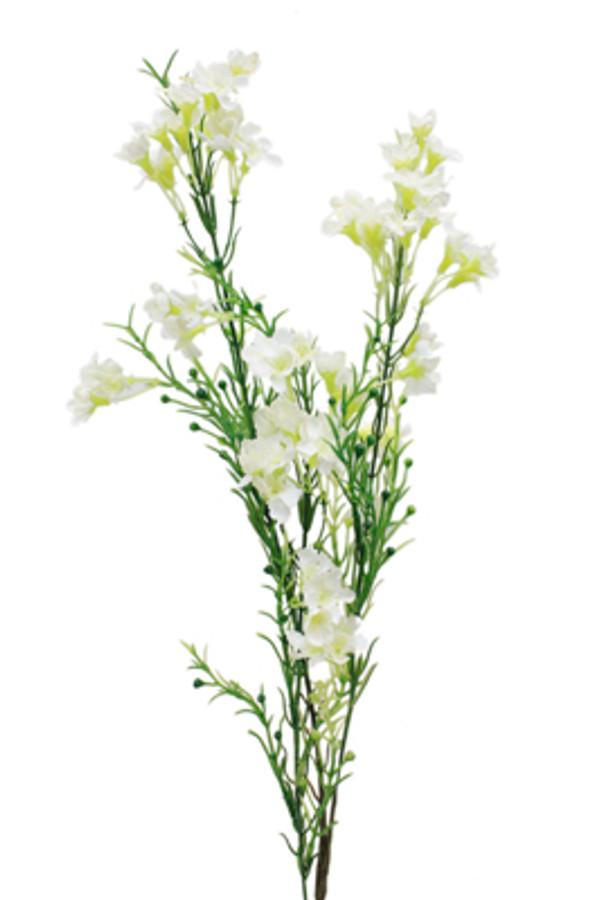 Waxflower White Union fl.