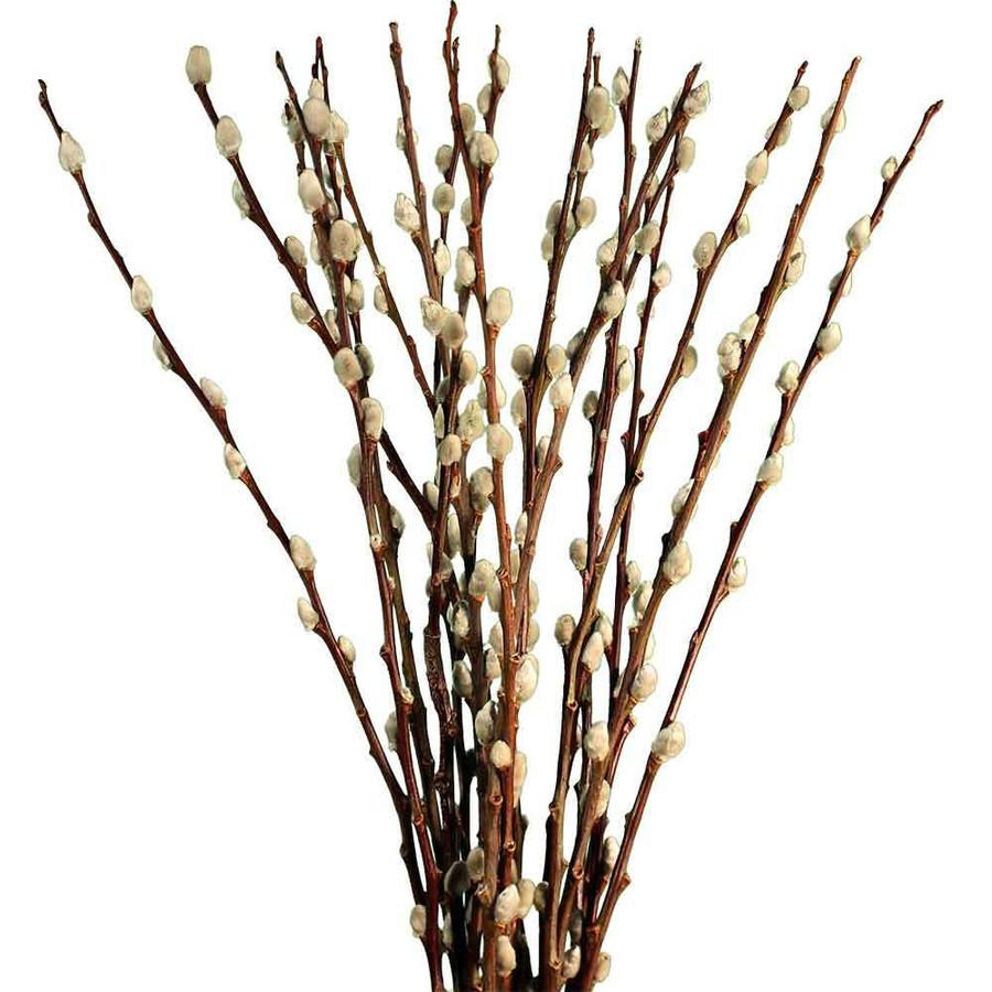 P.willow French 4'(10st)kraeme