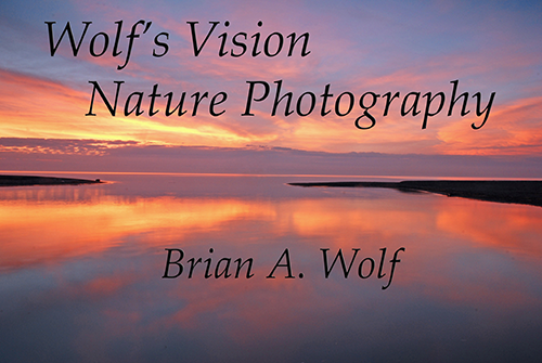 wolf-vision-photo-logo-sized-for-web.png