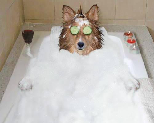 Poochie Dog Soap Bar