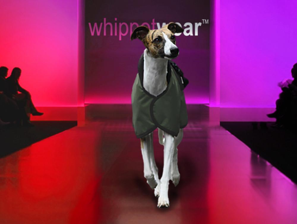Speed Whippet Coat