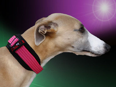 Whippetwear Martingale Perfect Fit Stunning Style