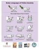 Body Language Of Feline Anxiety 100 Sheet Handout
