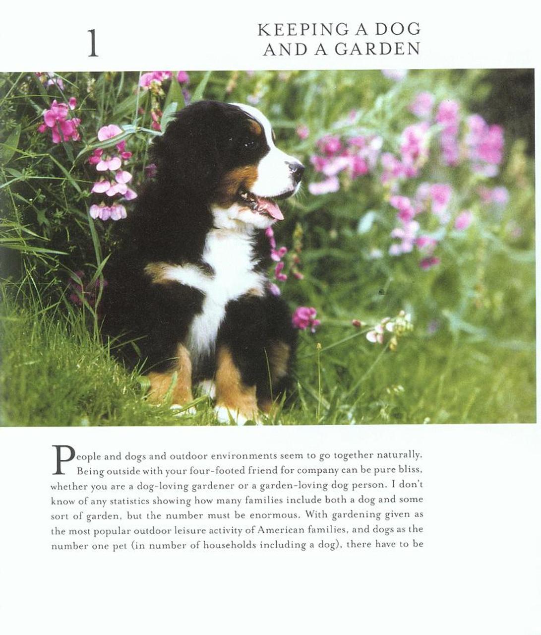 dog friendly gardens garden friendly dogs dogwise