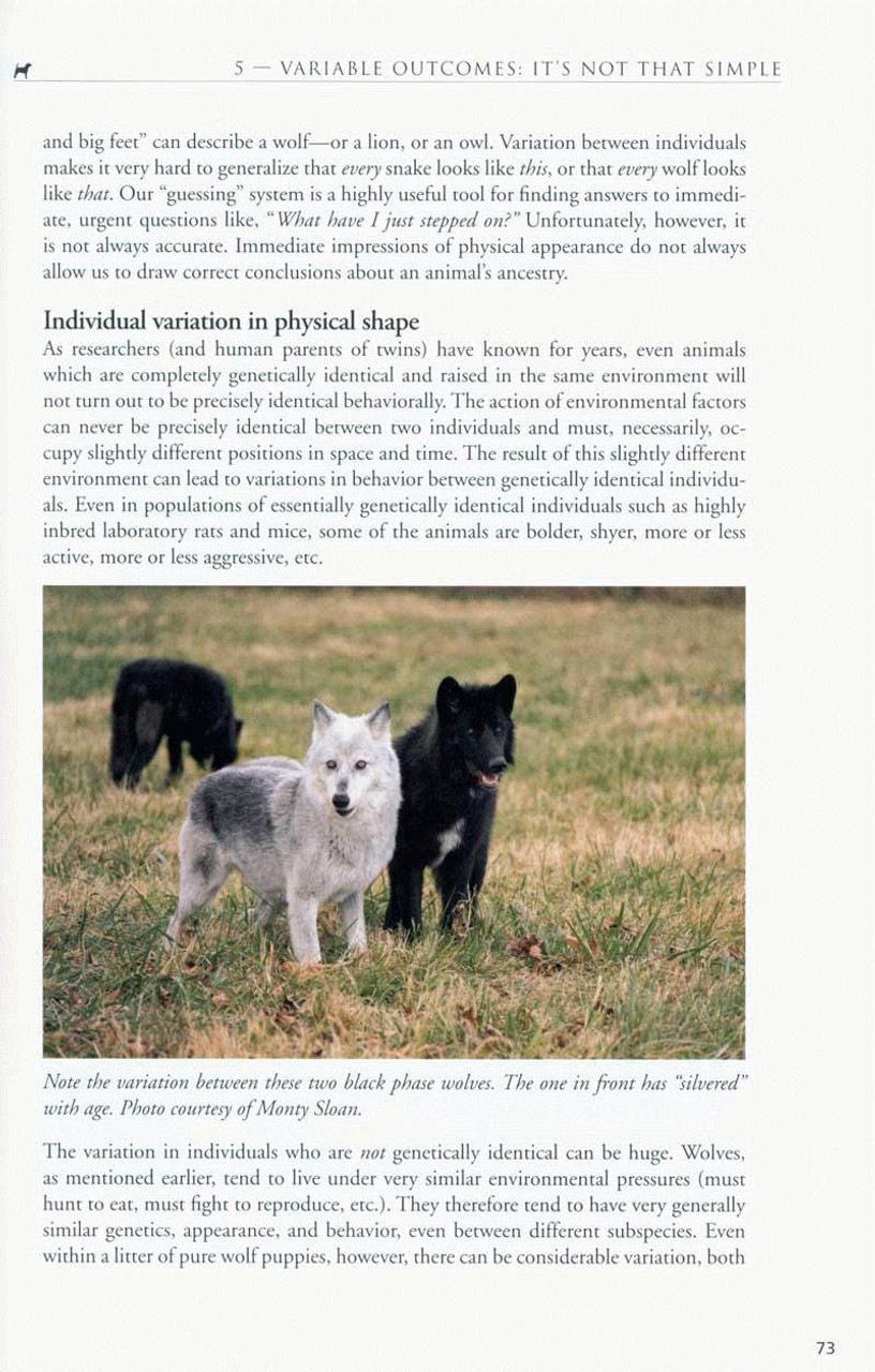 Between Dog and Wolf - Understanding The Connection and The ...