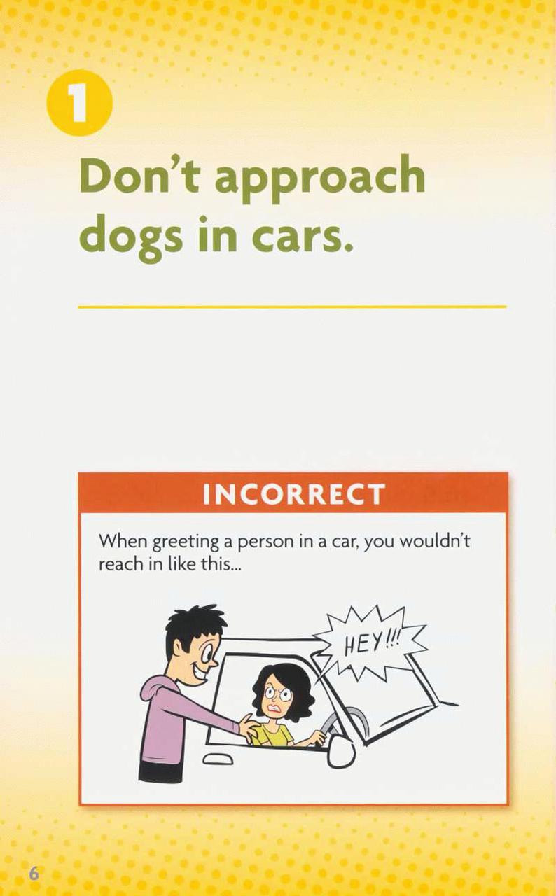 How To Greet A Dog And What To Avoid 10 Pack Dogwise